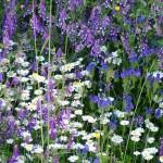 piante_officinali