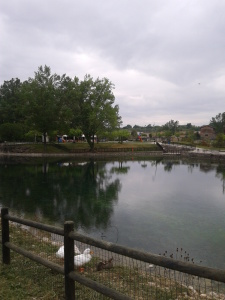 lagopulizia1