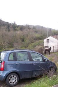 cavallo (1)